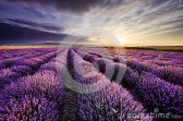 lavender-sunrise-dramatic-clouds-over-field-42517507